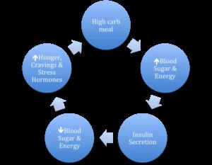 วงจร ระดับน้ำตาลในเลือด หลังจาก ทานอาหาร และผลต่อฮอร์โมน